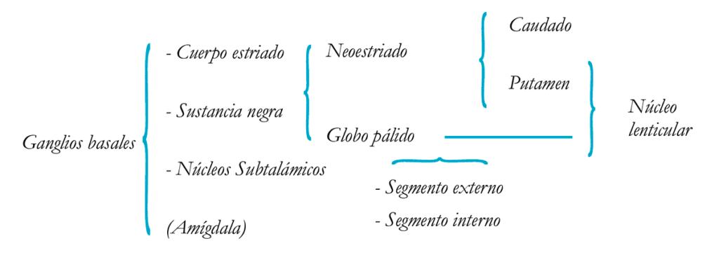 esquema ganglios basales