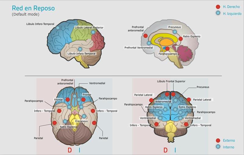 red en reposo marco teórico neuronup