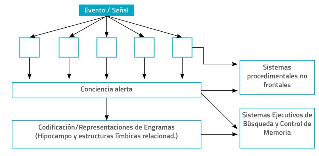 sistemas de memoria segun tareas